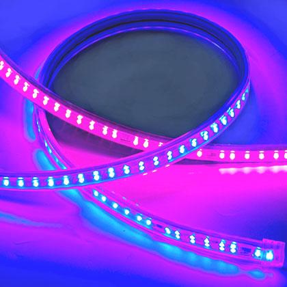 2835-176D-220V-12MM-帶IC-紅光+藍光
